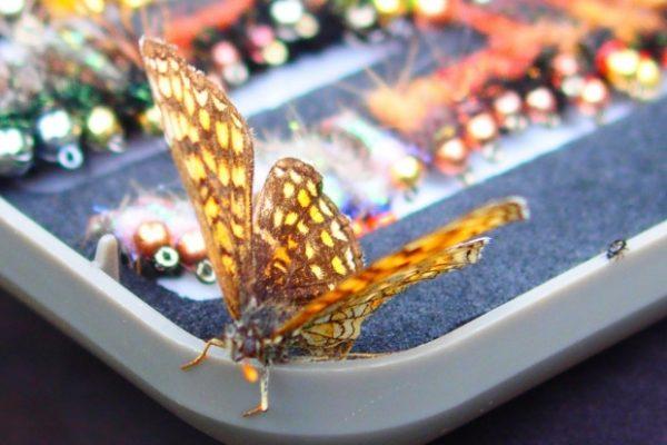 Lipień Litwy 2016 Butterfly